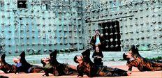 Χίλιες δύο πέτρες έδεσε και κρέµασε από τα ερείπια του παλαιού  ελαιουργείου της Ελευσίνας ο διεθνούς φήµης εικαστικός Γιάννης Κουνέλλης  για το σκηνικό του ελληνοτουρκογερµανικού «Προµηθέα δεσµώτη» κατά  Θεόδωρο Τερζόπουλο
