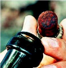 ¬ Ηπαλαιότερη σαµπάνια. Οι δύτες που ανακάλυψαν τα 30 µπουκάλια στο ναυάγιο δεν αντιστάθηκαν στον πειρασµό...