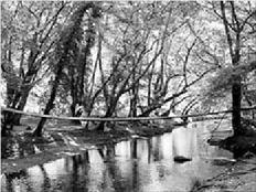 Εικόνα από το «Πλατανόδασος του ποταµού Κηρέα»