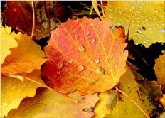 Τα φύλλα των  δέντρων που  πέφτουν µεταφέρουν µαζί  τους ρύπους  από την ατµόσφαιρα