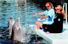 Τα δύο δελφίνια,  ο Τάνερ, µε τα µάτια καλυµµένα, και ο Κίµπι, ακολουθούν τις οδηγίες των εκπαιδευτών τους